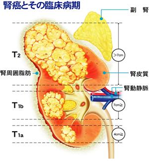 診療の特徴や詳細情報(泌尿器科...